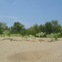 Песок,тишина,первый день отпуска за свой счёт :: tgtyjdrf