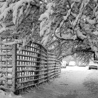 Первый снег :: Сергей Буданов