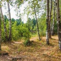 Жаркое лето :: Виталий