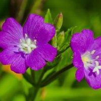 Цветок :: Ильдус Хамидулин