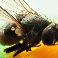 fly :: Aleksandr Tishkov