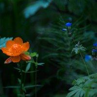 Таёжные цветы :: Юрий Лутов