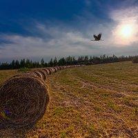 На поле :: Владимир Миронов