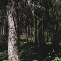 Таинственный лес... :: Павел Зюзин