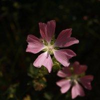 как называется цветок? :: Александр Иванов