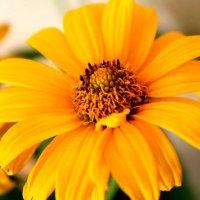 Цветочек :: Инна Дегтяренко