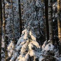 Зима :: ast62