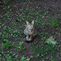 Кошка попрошайка :: Дмитрий Сушкин