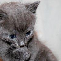 Котёнок Борис :: Ирина я