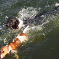Ни одна из собачек, точно, не принимала мельдоний :: Андрей Лукьянов