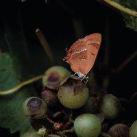 Космическая бабочка :: Наталья Терентьева