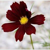 Цветочек из детства-) :: Любовь Чунарёва