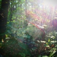 Прогулка в лесу :: Ирина Блажи