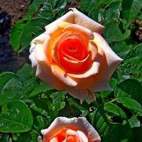 Два цветка :: Юрий Владимирович 34