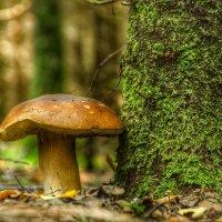 Полубелый гриб :: Va-Dim ...