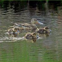 Мама и дети :: Аркадий Иваковский