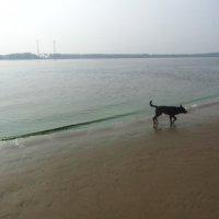 щенок на острове :: tgtyjdrf