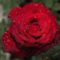 Прекрасен сад после дождя..1 :: Елена Лобанова