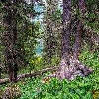 В диком лесу :: Андрей Поляков