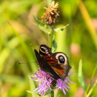 цветок и бабочка :: Галина Кубарева
