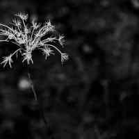 Осенняя соната :: Надежда Щукина