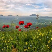 Маки на фоне основных гор Кавминвод. :: Фёдор. Лашков