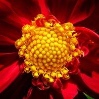 Цветок :: Дмитрий Арсеньев