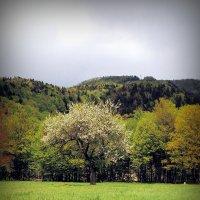 сады в горах тоже цветут :: Lilek Pogorelova