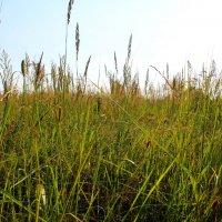 Повсюду трава... :: Катя Бокова