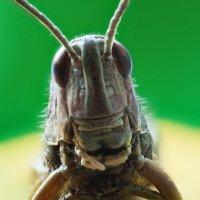 grasshopper :: Aleksandr Tishkov