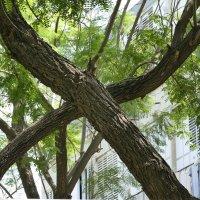деревья :: Ефим Хашкес