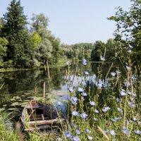 На реке :: Olga Golub