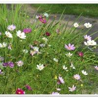 летние цветы :: Наталия П