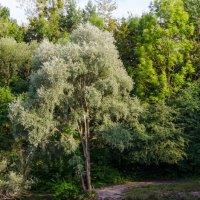 Дерево :: Eugen Pracht