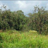 Старый яблоневый сад.(Уходящее). :: Роланд Дубровский