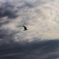 чайка :: Наталья Литвинчук