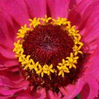 цветок :: Alexandr Staroverov