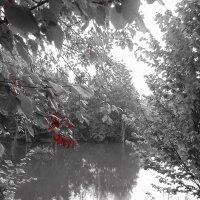 Багровеет листва деревьев на берегу пруда. :: Людмила Ларина