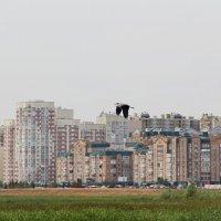 Казань :: Анастасия Макрушина