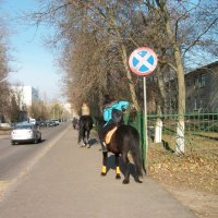 По улицам слона (зачёркнуто) коня водили, как будто напоказ) :: Галина Бобкина