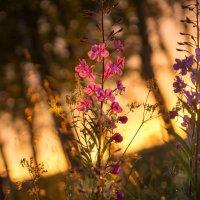 На закате дня :: Виктор Батавин