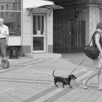 Кобели и сучки :: Андрей Майоров