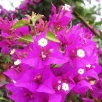 Необыкновенные цветы :: татьяна