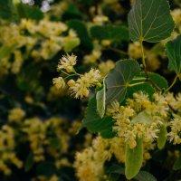 Цветущие растения :: Света Кондрашова