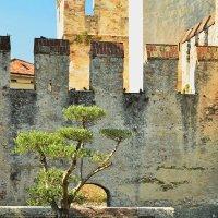 Старые стены :: Николай Танаев