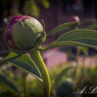 Цветы) :: Asya Dubova
