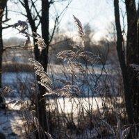 Немного зимы :: Владимир Безбородов