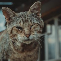Уличный кот :: Павел Кандауров