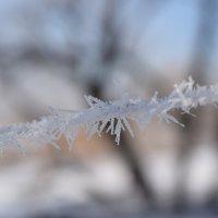 Немного хрусткой зимы в жаркое лето :: Agnivarshi Малтыз