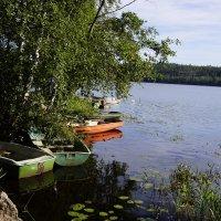 Утро на озере. :: Vladimir